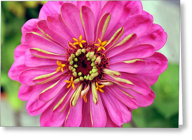 State Fair Zinnia Greeting Card