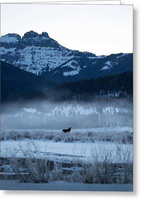 Statuesque Moose // Round Prairie, Yellowstone National Park Greeting Card by Nicholas Parker