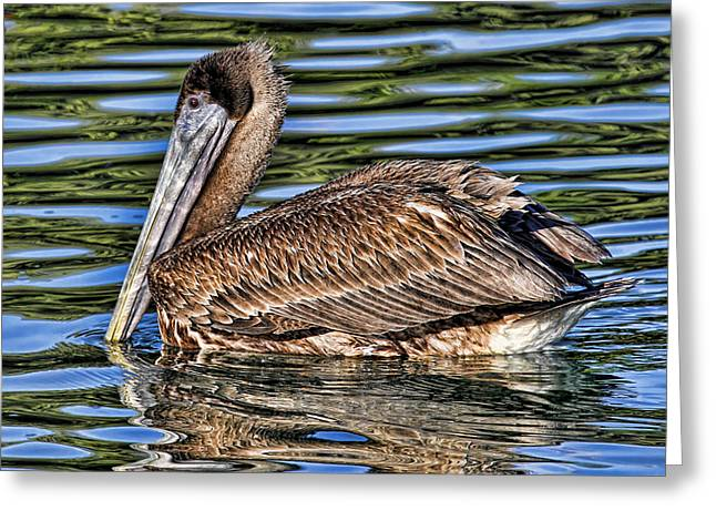 Staying Afloat 2 - Brown Pelican Swimming Greeting Card by HH Photography of Florida