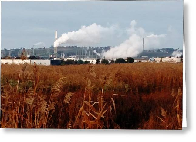 Steam Plants On Grizzly Bay Greeting Card by Peggy Leyva Conley