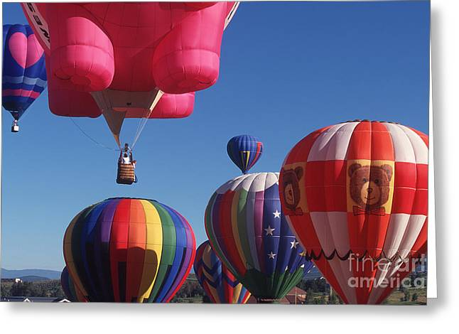 Steamboat Springs Balloons Greeting Card by Stan and Anne Foster
