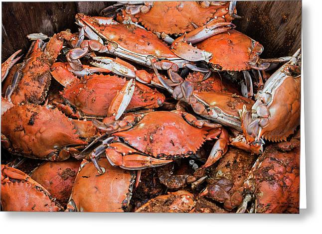 Steamed Crabs Greeting Card by Brian Wallace