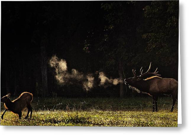 Steamy Breath Elk Bugle Greeting Card