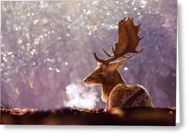 Steamy Stag Greeting Card