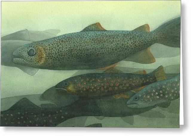 Steelhead Greeting Card by Anne Havard