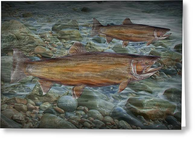 Randy Greeting Cards - Steelhead Trout Fall Migration Greeting Card by Randall Nyhof