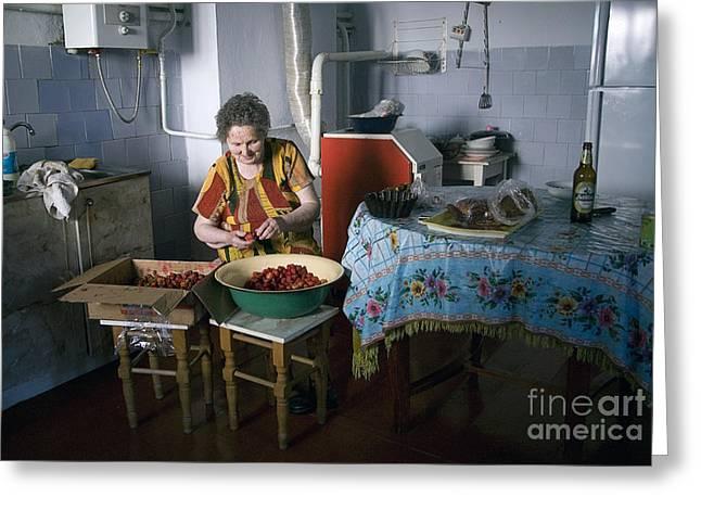Stefania Cleans Strawberries In Chortkiw Ukraine Greeting Card by Yuri Lev