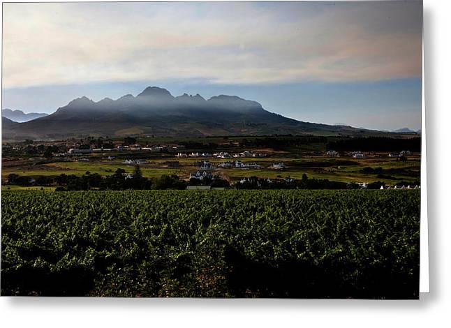 Stellenbosch Vineyard Greeting Card by Dale Halbur