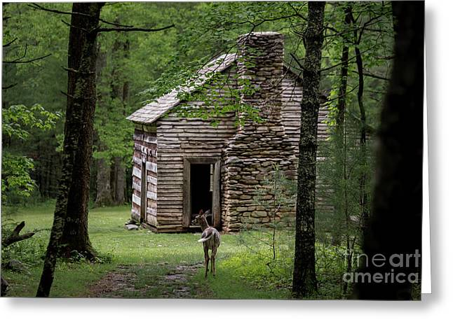 Greeting Card featuring the photograph Step Back In Time by Andrea Silies
