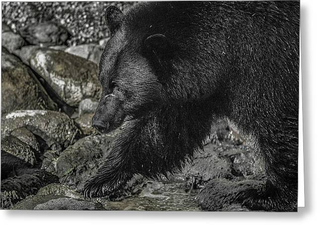 Stepping Into The Creek Black Bear Greeting Card