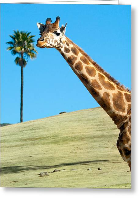 Sticking Your Neck Out Greeting Card by Melody Watson
