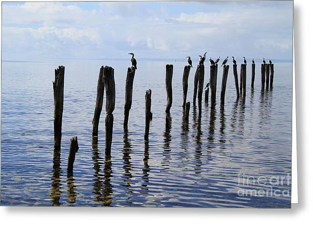Sticks Out To Sea Greeting Card