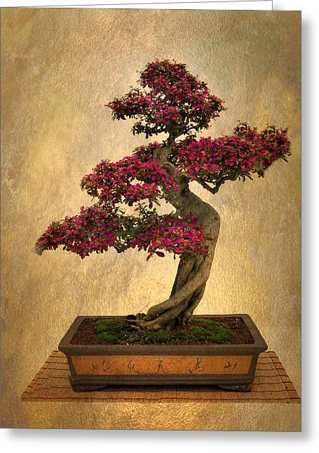 Still Life Bonsai Greeting Card