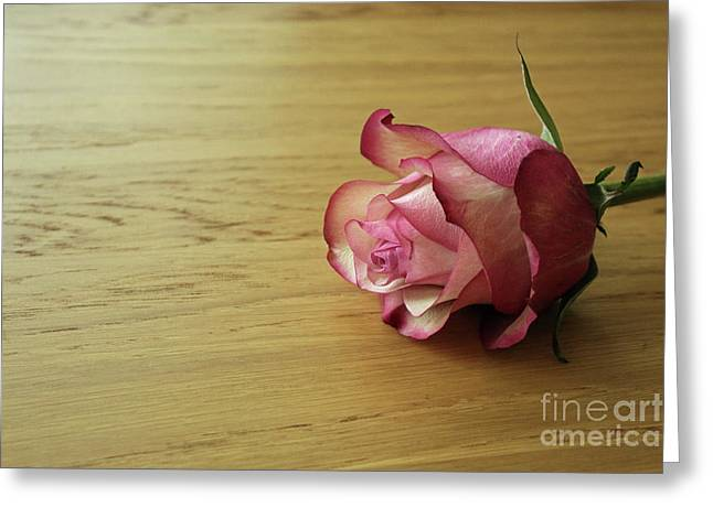Still Life, Macro Photo Of Pink Rose Flower Greeting Card by Pixelshoot Photography