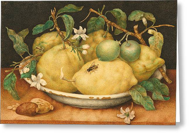 Still Life With A Bowl Of Citrons Greeting Card by Giovanna Garzoni