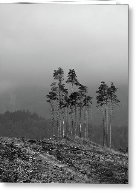 Greeting Card featuring the photograph Still Standing by RKAB Works