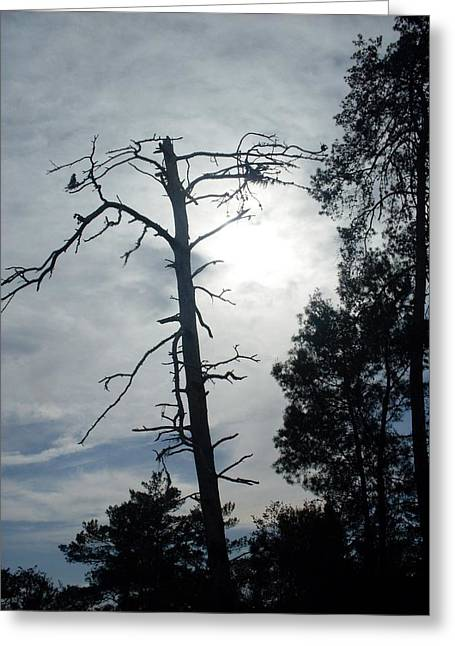 Still Standing Greeting Card by Warren Thompson