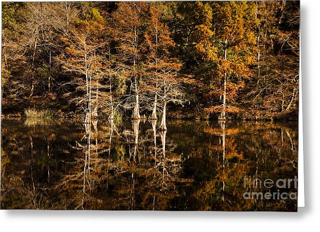 Greeting Card featuring the photograph Still Waters On Beaver's Bend by Tamyra Ayles