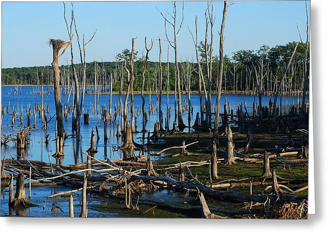 Still Wood - Manasquan Reservoir Greeting Card by Angie Tirado