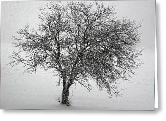 Stillness In The Storm Greeting Card by Jennifer Compton