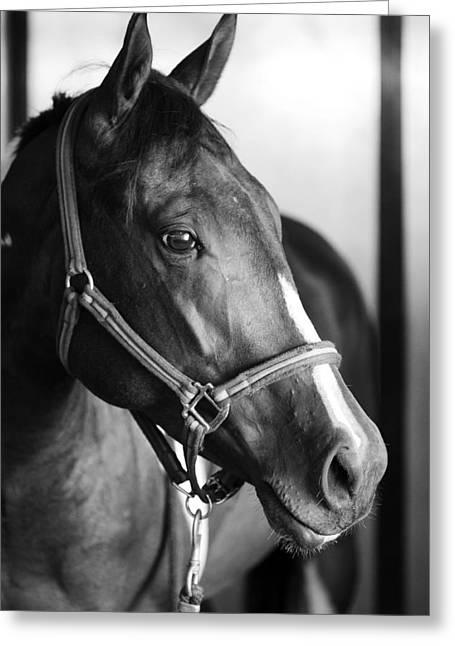 Horse And Stillness Greeting Card
