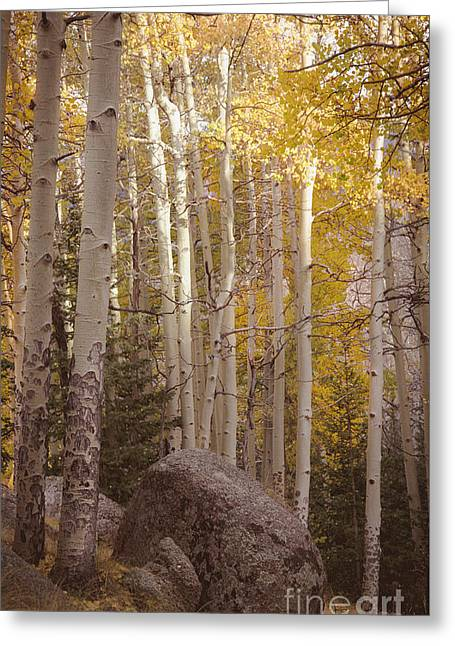 Greeting Card featuring the photograph Stillness by The Forests Edge Photography - Diane Sandoval