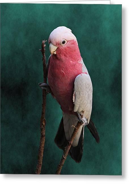 Stiltwalker - Roseate Cockatoo Greeting Card