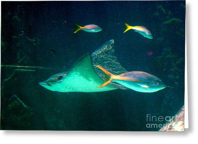 Sting Ray Greeting Card