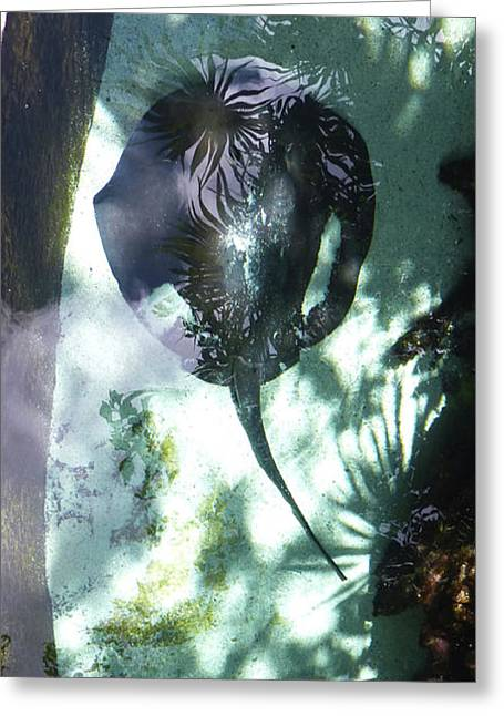 Greeting Card featuring the photograph Stingray Swim V by Francesca Mackenney