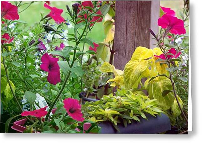 Stitched Flower Pot Photograph Greeting Card by Laurie Kidd