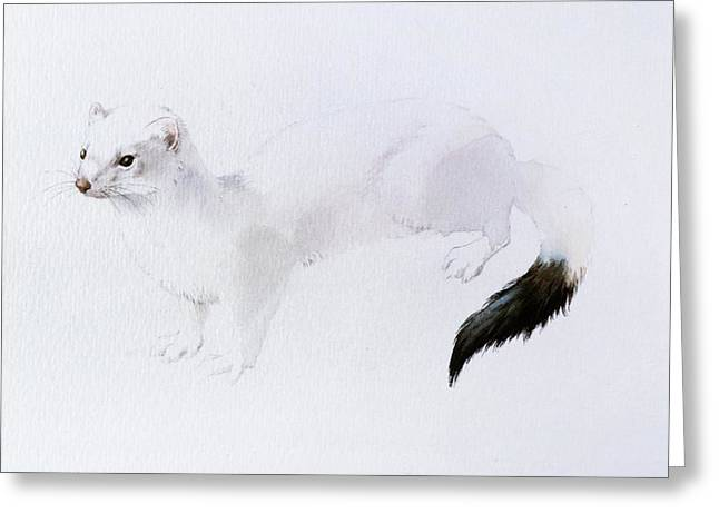 Stoat Watercolor Greeting Card by Attila Meszlenyi