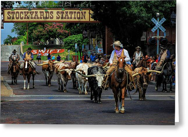 Stockyards Cattle Drive Greeting Card by David and Carol Kelly