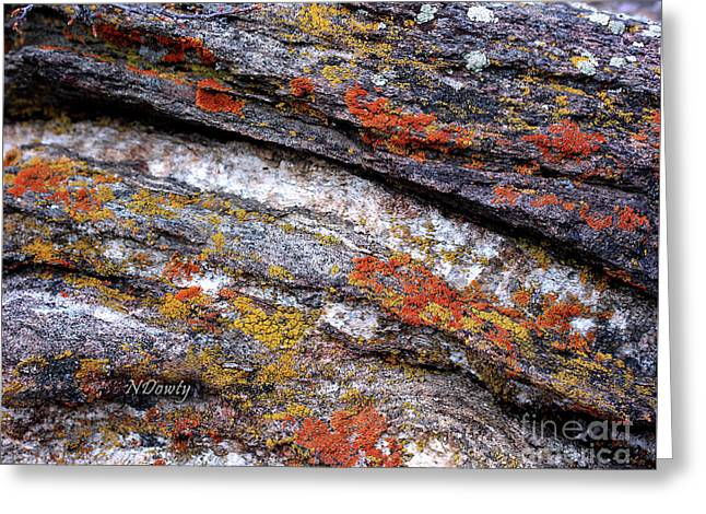 Stone And Lichen Greeting Card