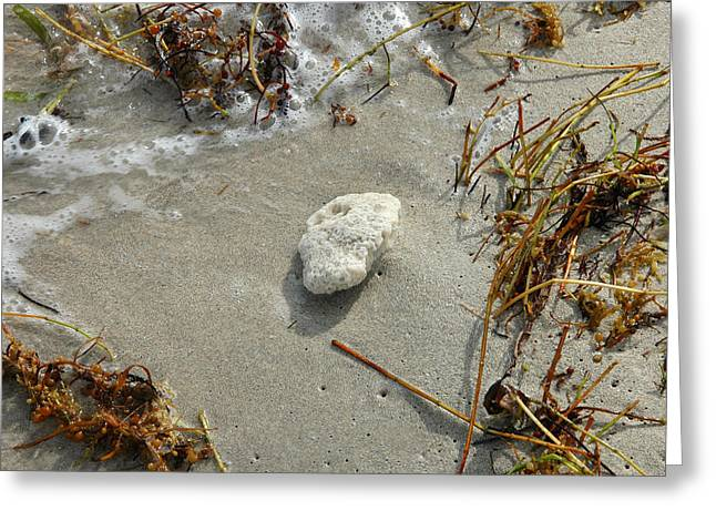 Stone At The Shore - South Beach Greeting Card