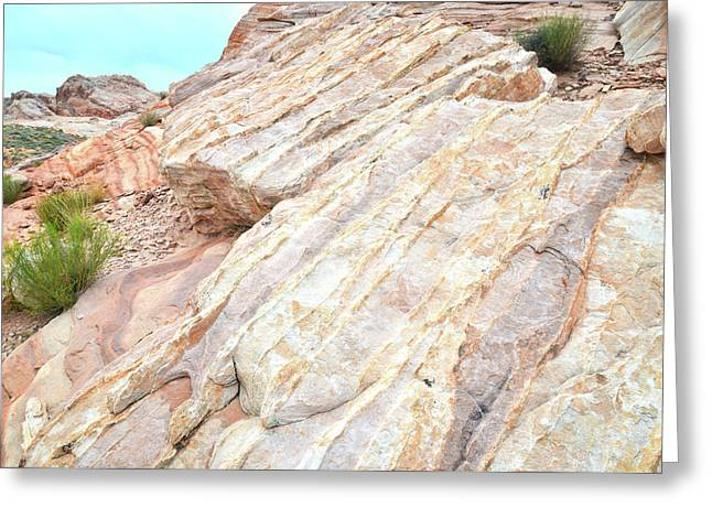 Greeting Card featuring the photograph Stone Feet In Valley Of Fire by Ray Mathis