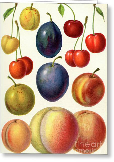 Stone Fruit Or Drupes Greeting Card