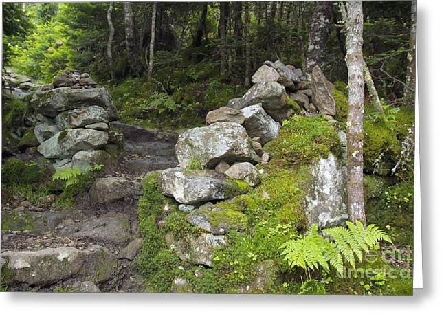 Stone Gate - Edmands Path - White Mountains New Hampshire  Greeting Card by Erin Paul Donovan