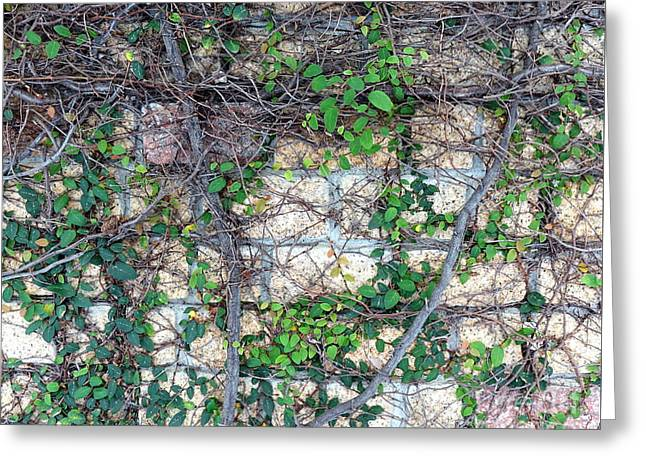 Greeting Card featuring the photograph Stone Wall Covered With Vines by Yali Shi