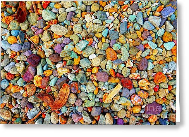 Stones And Barks On Beach Greeting Card