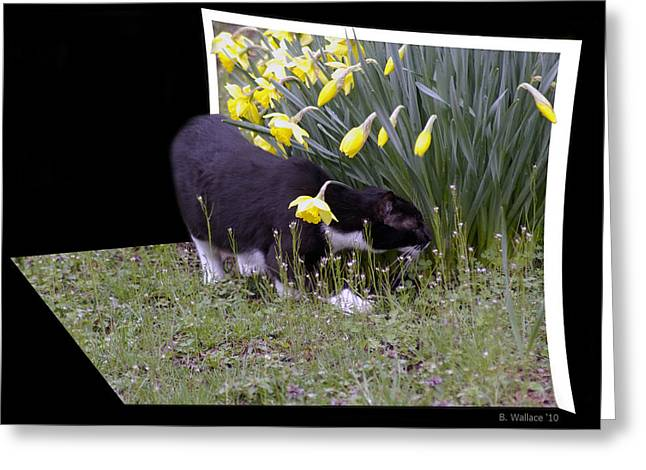 Pictures Of Cats Greeting Cards - Stop And Feel The Flowers Greeting Card by Brian Wallace