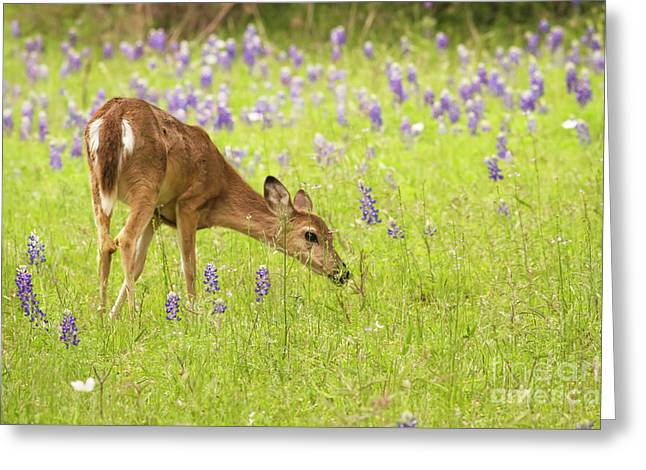 Stop And Smell The Bluebonnets. Greeting Card