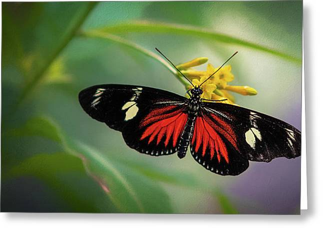 Butterfly, Stop And Smell The Flowers Greeting Card
