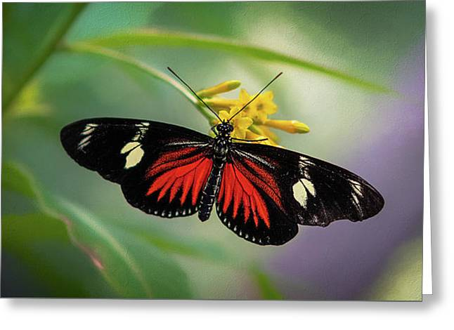 Greeting Card featuring the photograph Butterfly, Stop And Smell The Flowers by Cindy Lark Hartman