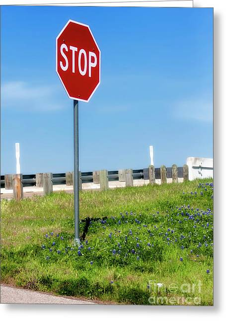 Stop For The Blue Bonnets Greeting Card by Joan Bertucci