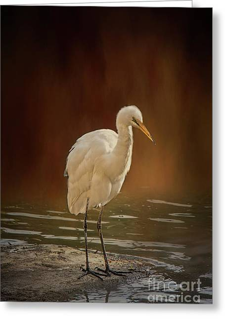 Greeting Card featuring the photograph Stork On A Rock by Elaine Teague