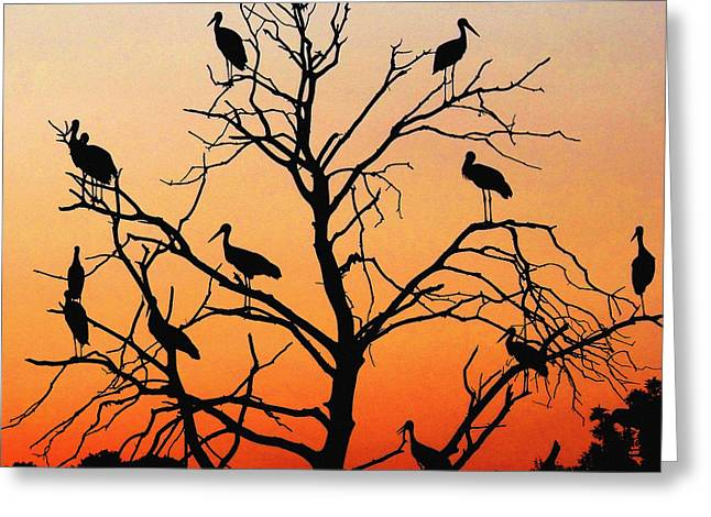 Storks In The Evening Sun Light Greeting Card