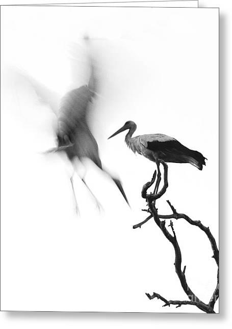 Storks Greeting Card by Nahum Budin