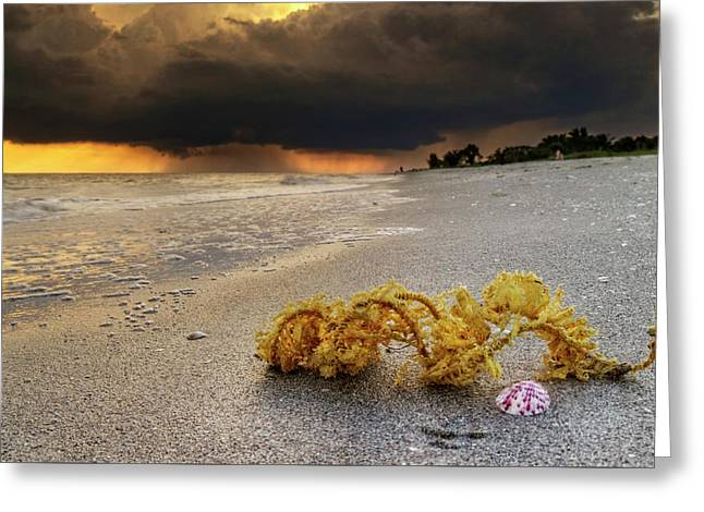 Storm And Sea Shell On Sanibel Greeting Card by Greg Mimbs