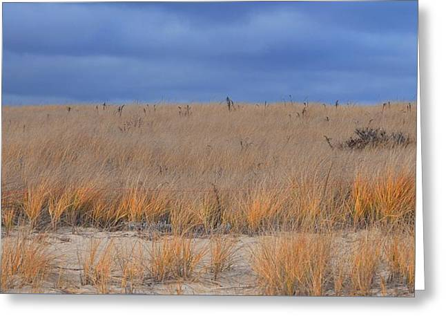 Storm Clouds And Beach Grass Greeting Card by Bill Driscoll