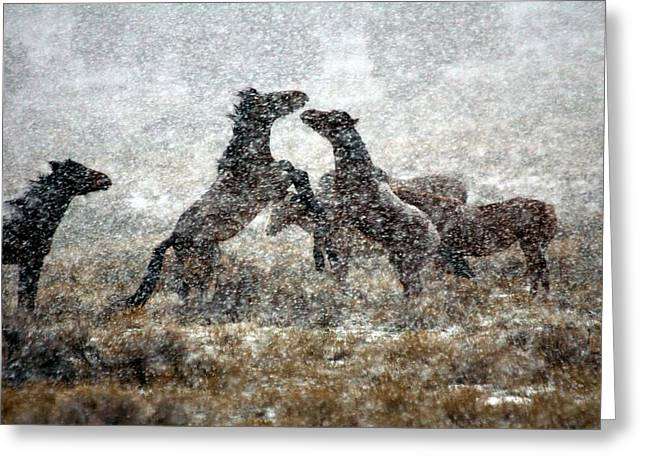Storm Fight Greeting Card by Gene Praag